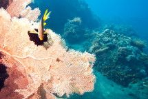 Master scuba Diving Eco internships