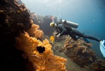 master scuba diving internships Eco