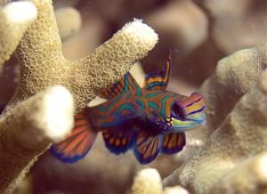 fish identification in Bali