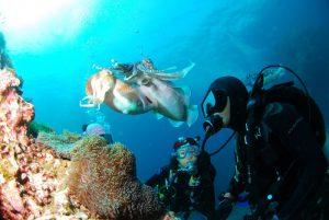 dive master - Dive Leader