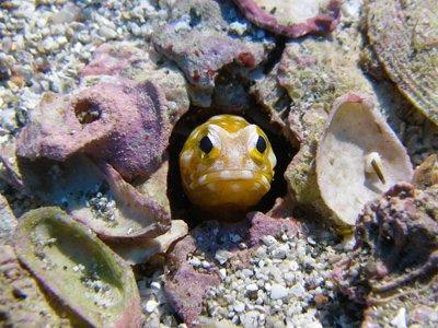 underwater experience idc bali