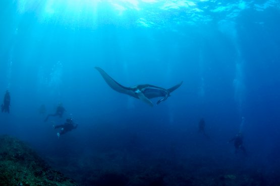 diving down under