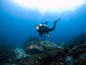 diver-and-turtle