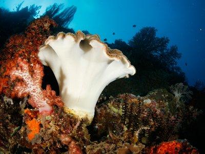 deep water nature