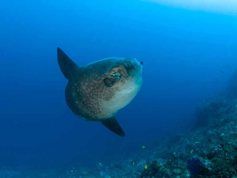 under water beauty
