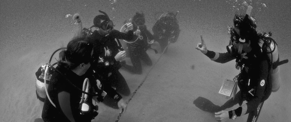 The PADI Instructor Examination Courses Diving