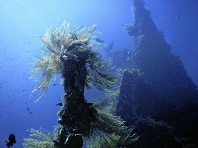 sea bottom nature
