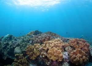 idc-snorkeling-full-nusa-penida