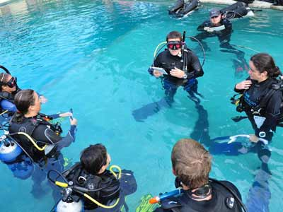 divers paying attention