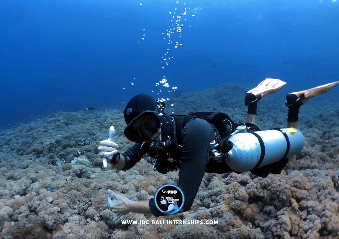 deep diver course bali