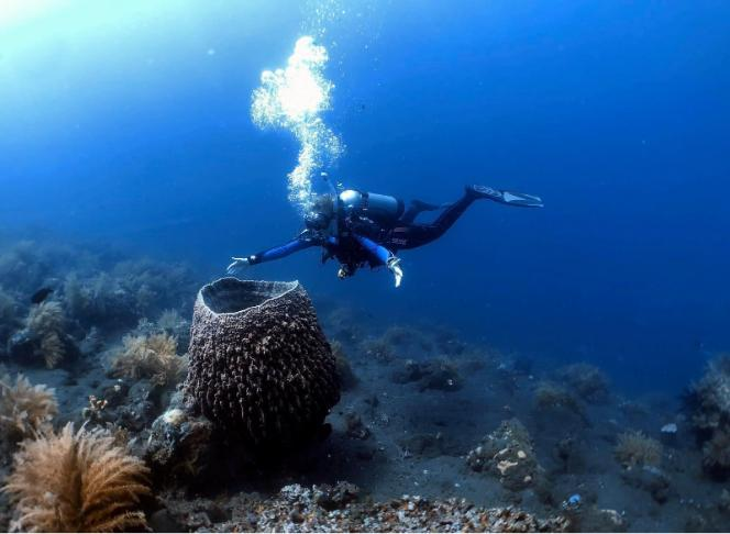 Embrace diving without fear