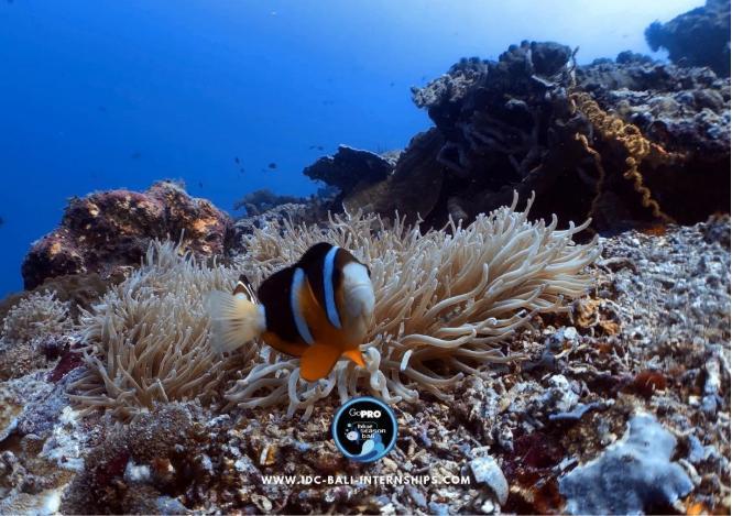 Fish Scuba Diving