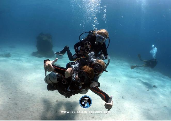 Three Scuba Divers